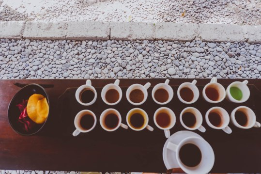 Coffee and Tea Tasting with Luwak Coffee