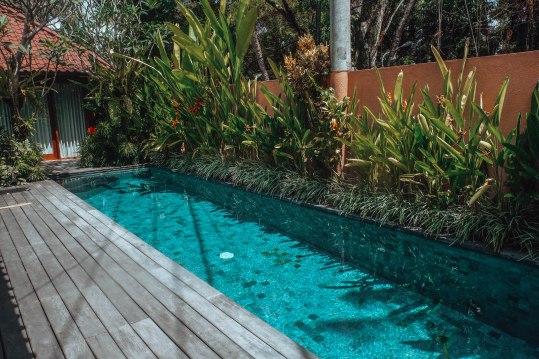 Lap Pool of Gekko's